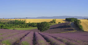 Aix and Lavander Tour