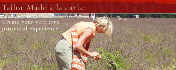 Picking lavender on a Real Provence Tailor Made holiday acation